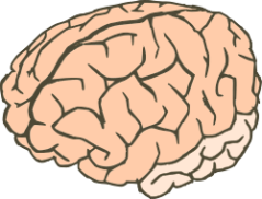 brain from Open Clip Art