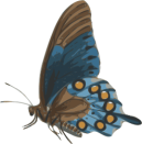 openclipart - butterfly